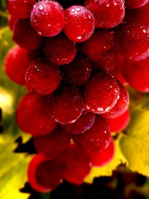картинка как приготовить вино из винограда