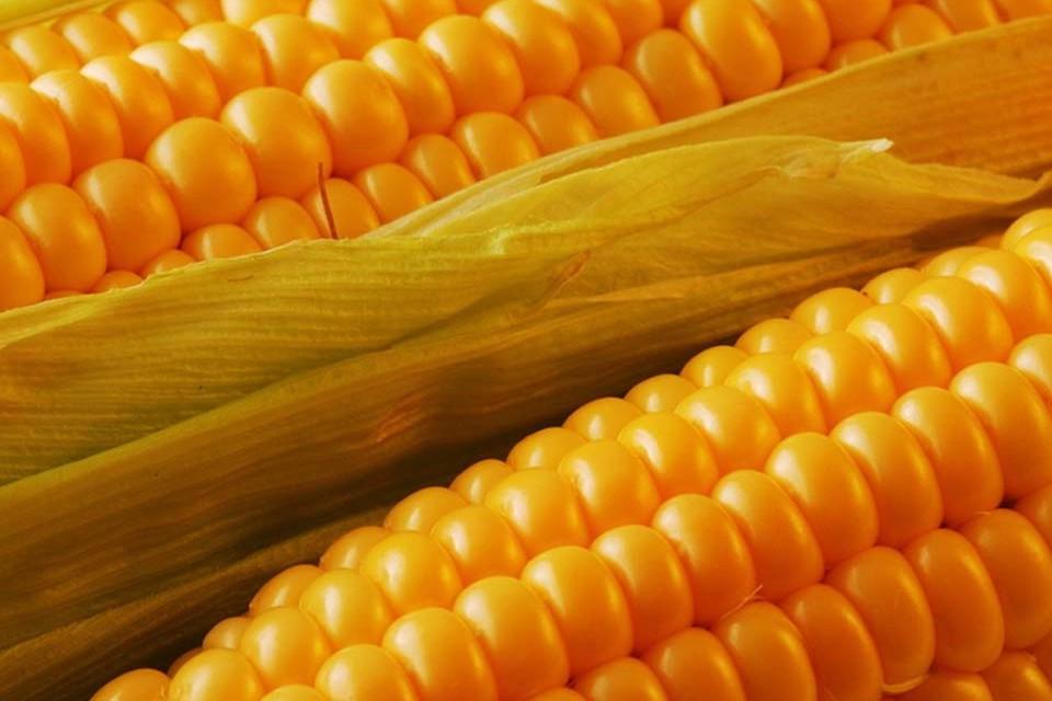 картинка консервирование кукурузы